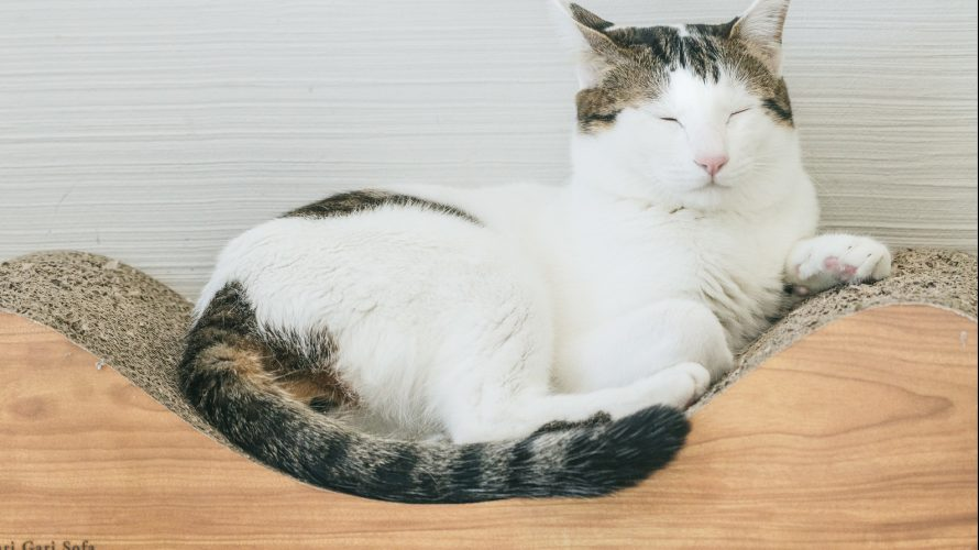 買ってよかった猫のおもちゃランキングTOP5!うちの猫が乱舞する